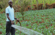 Interviewing 2,800 farmers to evaluate Plantwise Clinics